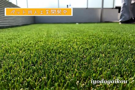 ペットのための人工芝。たぶんこのアイデアは世界発