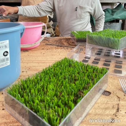 新しいタイプの人工芝サンプル制作