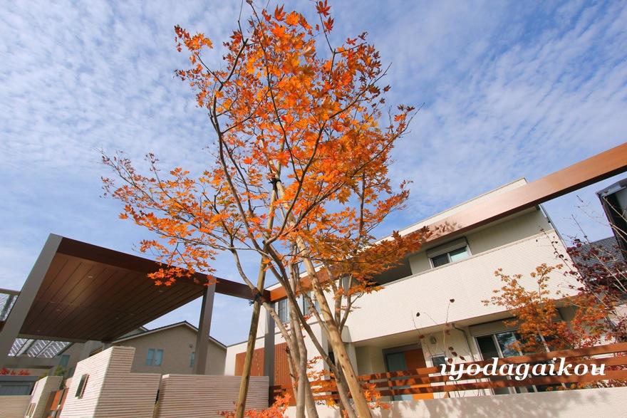 シンボルツリーはヤマモミジ 紅葉が素敵です